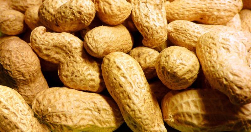 peanut-1029804_1920